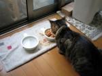 早めの夕飯